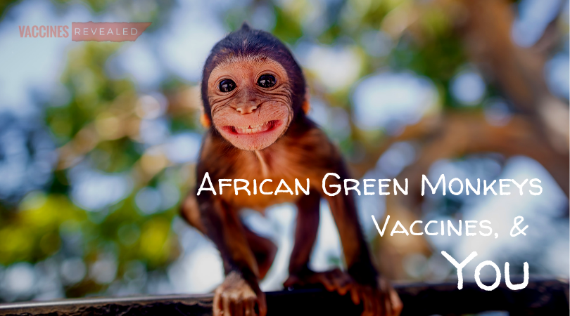 African Green Monkeys, Vaccines, and You